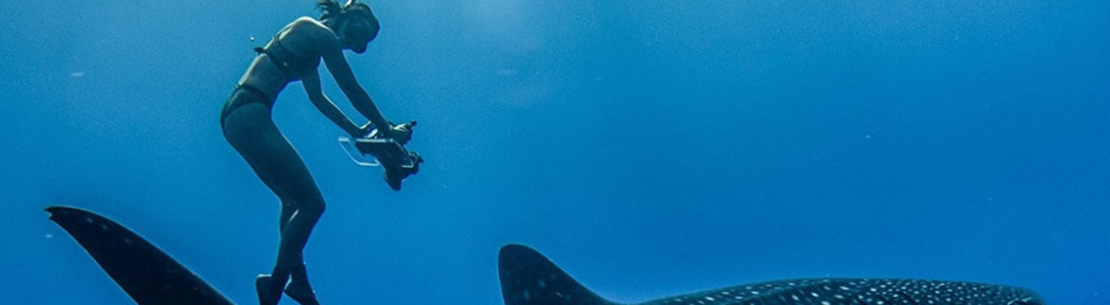 INTERNATIONAL OCEAN FILM TOUR V.6